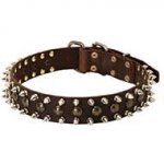 Spiked and Studded Leather Siberian Husky Collar for Fashionable Walking