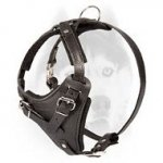 Training leather Siberian Husky harness with D-ring