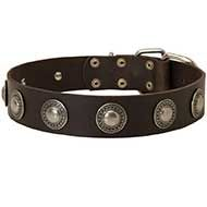 Fabulous Leather Siberian Husky Collar with Hand Set Silver Conchos
