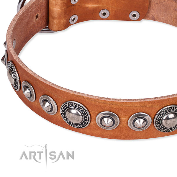 Fancy walking adorned dog collar of reliable full grain genuine leather