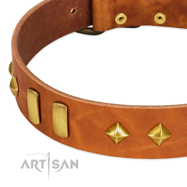 Handy use leather dog collar with unusual embellishments