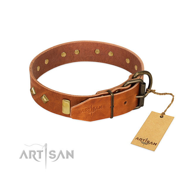 Fancy walking leather dog collar with top notch adornments