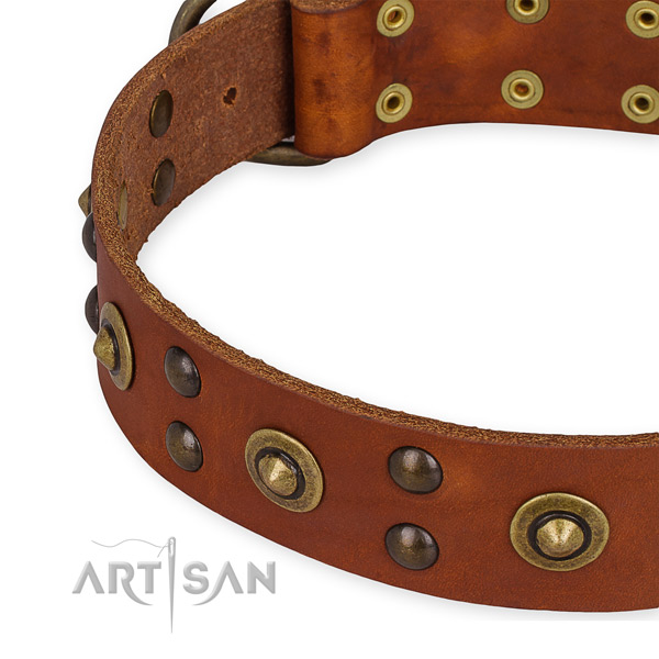 Full grain natural leather collar with corrosion proof hardware for your stylish canine