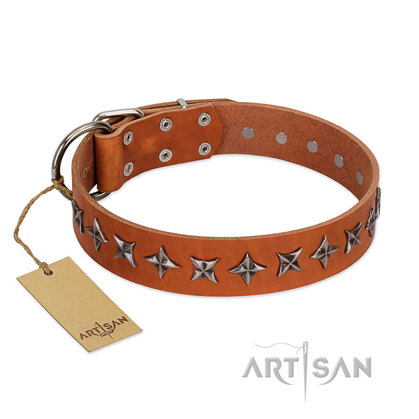 Fancy walking dog collar of top quality natural leather with adornments