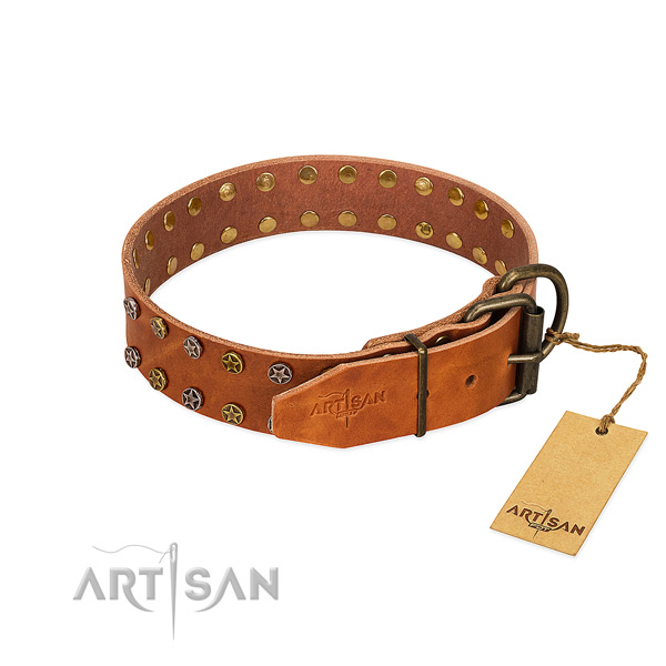 Fancy walking full grain natural leather dog collar with amazing embellishments