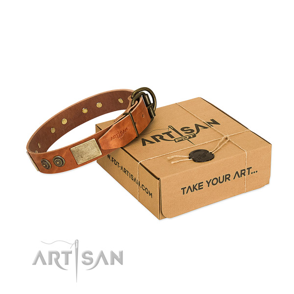 Durable traditional buckle on leather dog collar for stylish walking