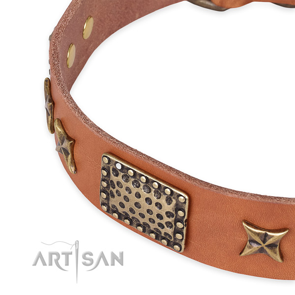Leather collar with rust-proof buckle for your beautiful four-legged friend