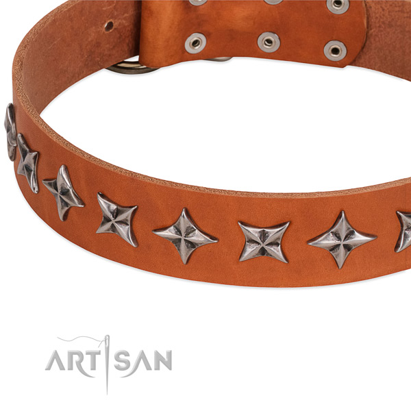 Fancy walking decorated dog collar of best quality full grain natural leather