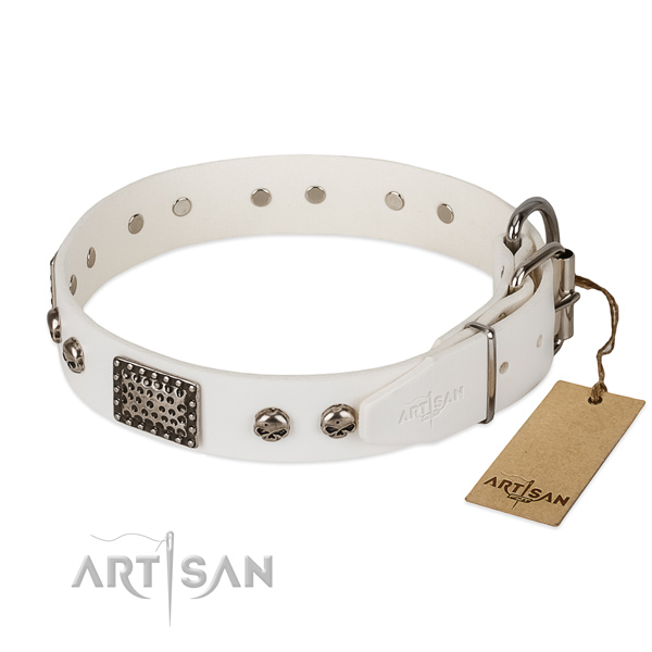 Corrosion proof buckle on everyday use dog collar