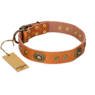 """Dandy Pet"" FDT Artisan Handcrafted Tan Leather Siberian Husky Collar"