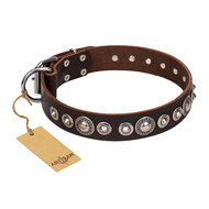 """Step and Sparkle"" FDT Artisan Glamorous Studded Brown Leather Siberian Husky Collar"