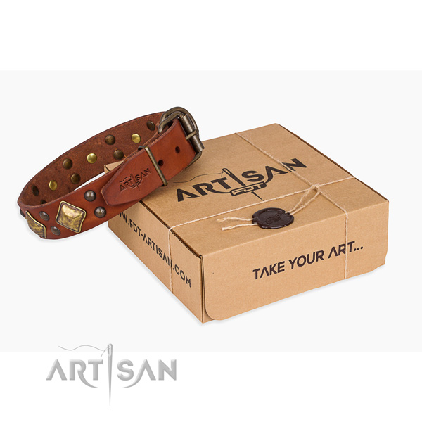 Fancy walking dog collar with Unusual rust-proof studs
