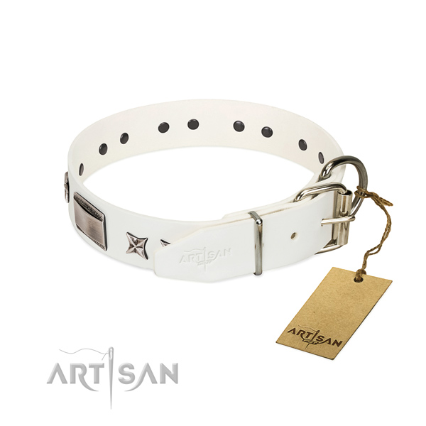 Studded collar of genuine leather for your beautiful canine