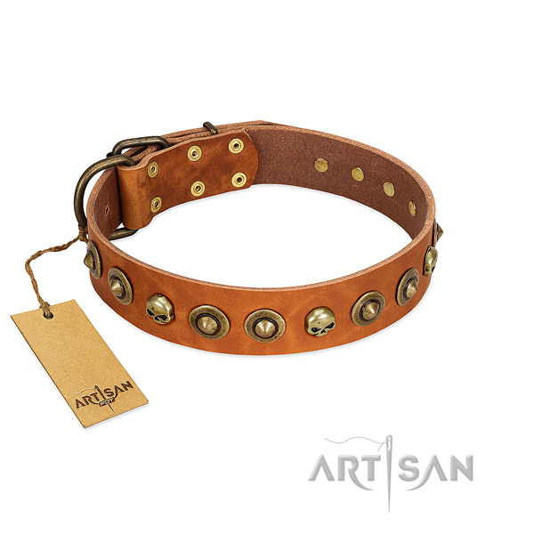 Natural leather collar with designer adornments for your four-legged friend