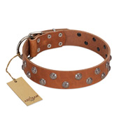 """Waltz of the Flowers"" Handmade FDT Artisan Tan Leather Siberian Husky Collar with Chrome-plated Engraved Studs"