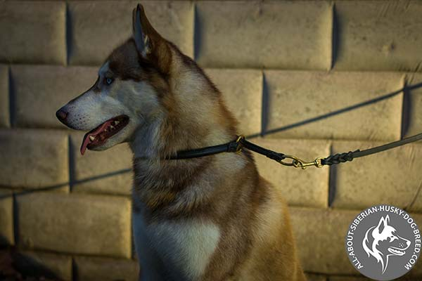 Siberian Husky Choke Collar for Safe Walking