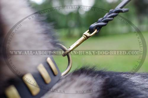 Reliable brass hardware for leather Siberian Husky collar