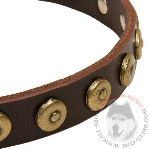 Siberian Husky Designer Leather Collar with Brass Circles