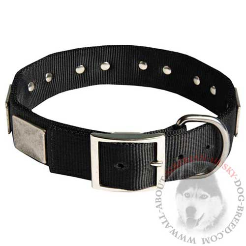 Nylon Siberian Husky Collar for Any Weather Walking