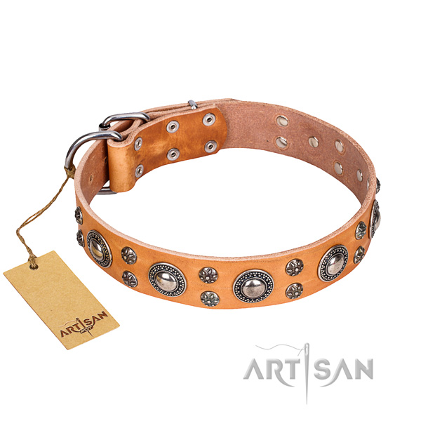 Stunning full grain natural leather dog collar for walking