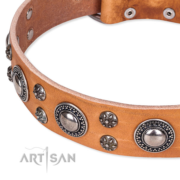 Everyday use full grain natural leather collar with strong buckle and D-ring