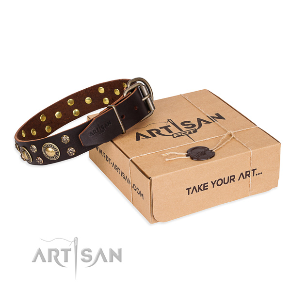 Awesome genuine leather dog collar for everyday walking