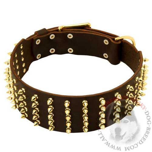 Wide Brass Spiked Leather Collar for Siberian Husky Walking