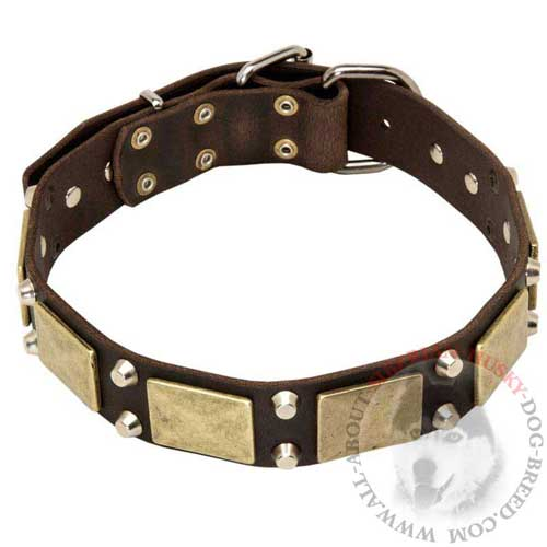 Studded Leather Collar for Siberian Husky Walking in Style
