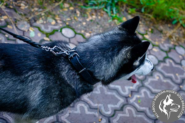 Handcrafted Leather Siberian Husky Collar with High-quality Hardware