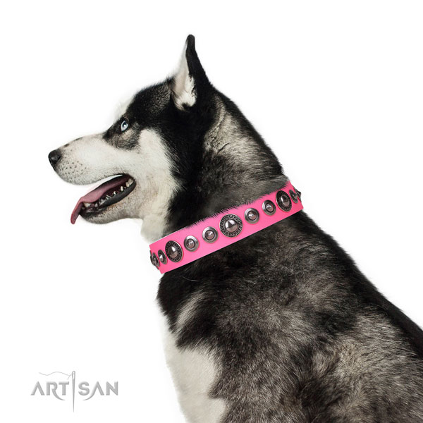 Remarkable decorated leather dog collar for stylish walking