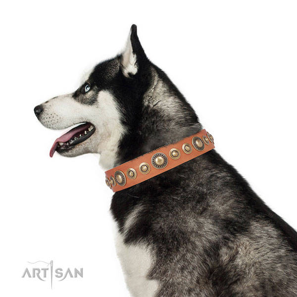 Rust resistant buckle and D-ring on leather dog collar for walking