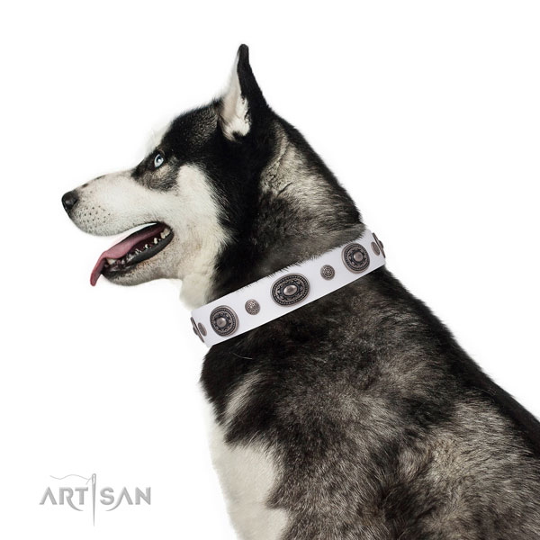 Leather dog collar with corrosion resistant buckle and D-ring for daily walking