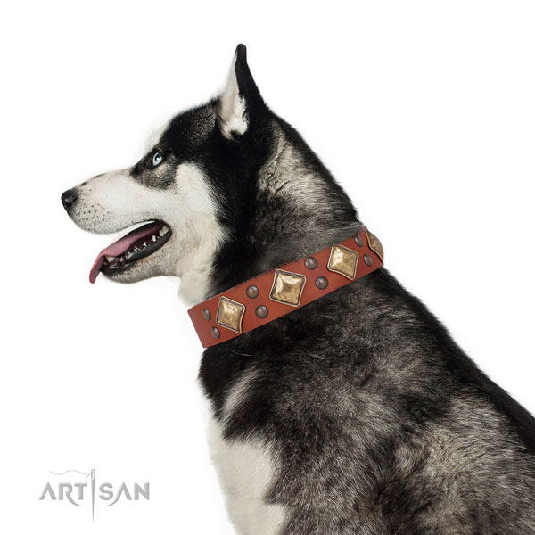 Daily walking studded dog collar made of top rate natural leather