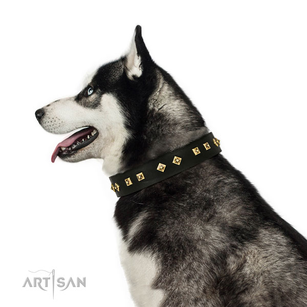 Stylish design decorations on fancy walking full grain leather dog collar