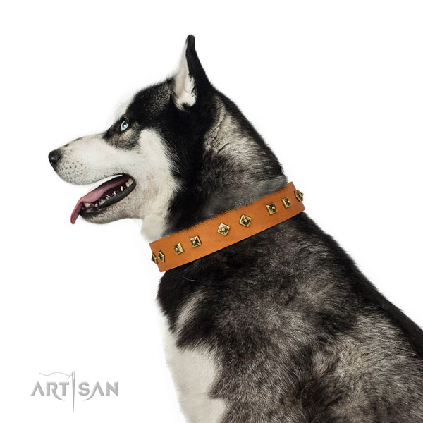 Exquisite decorations on daily use dog collar