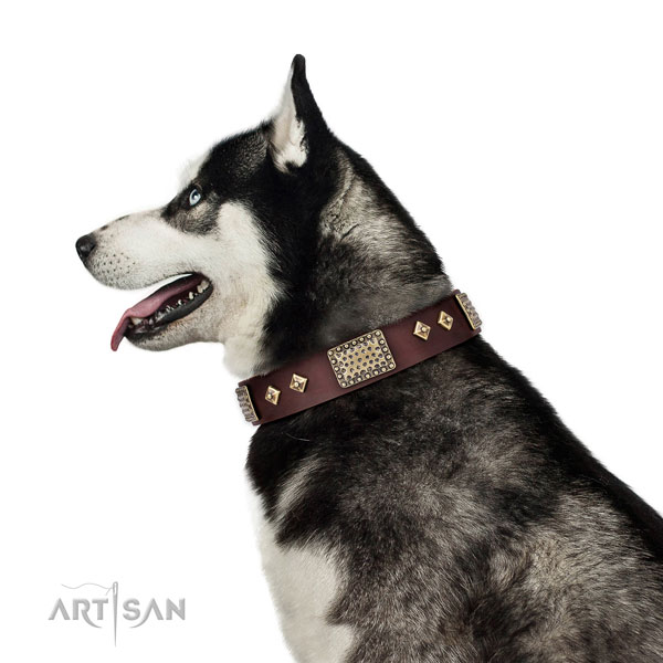 Reliable easy wearing dog collar of natural leather