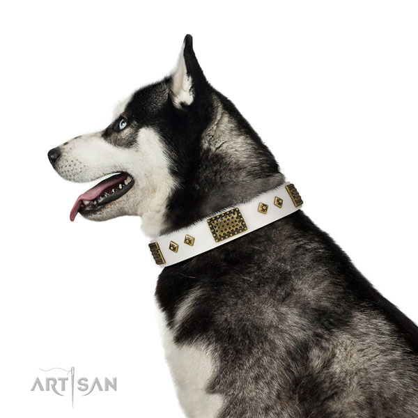 Handy use dog collar of natural leather with stunning adornments