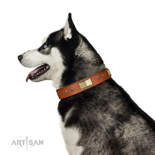 Comfy wearing dog collar of leather with significant decorations