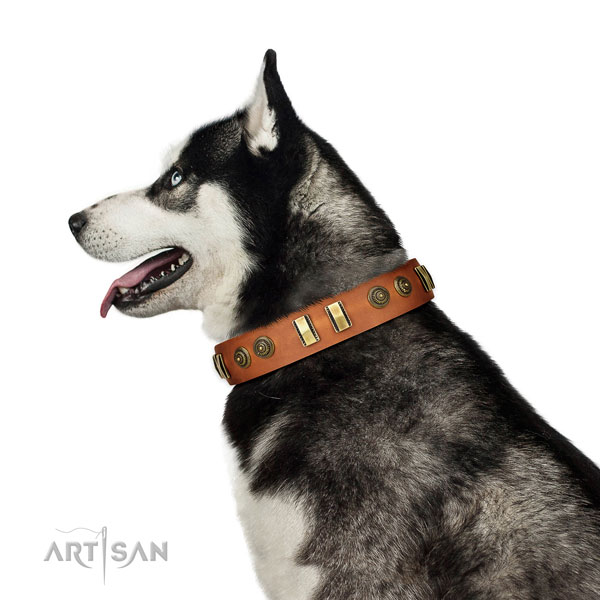 Corrosion proof hardware on natural leather dog collar for daily walking