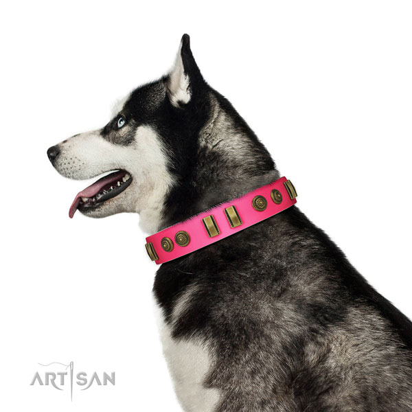 Basic training dog collar of natural leather with significant studs