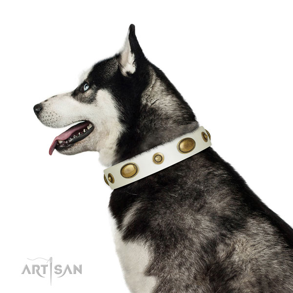 Fancy walking dog collar of genuine leather with impressive studs