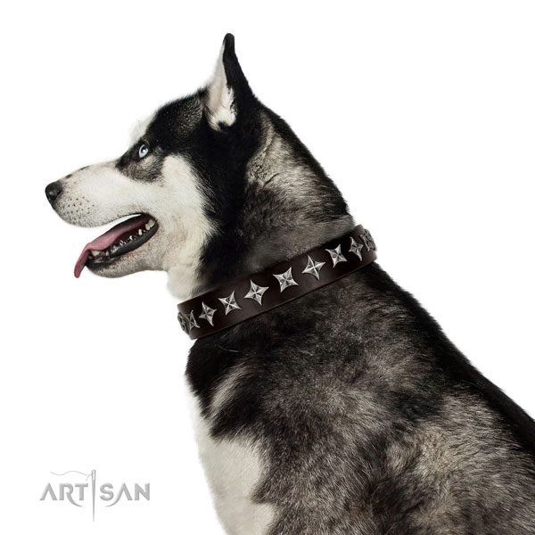 Comfortable wearing adorned dog collar of finest quality leather