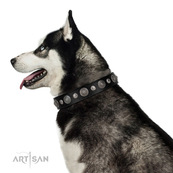 Natural leather collar with reliable buckle for your handsome dog