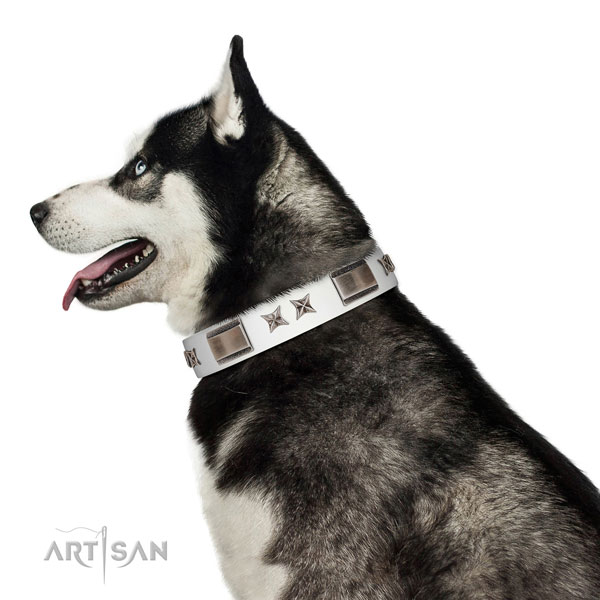Extraordinary collar of leather for your lovely pet