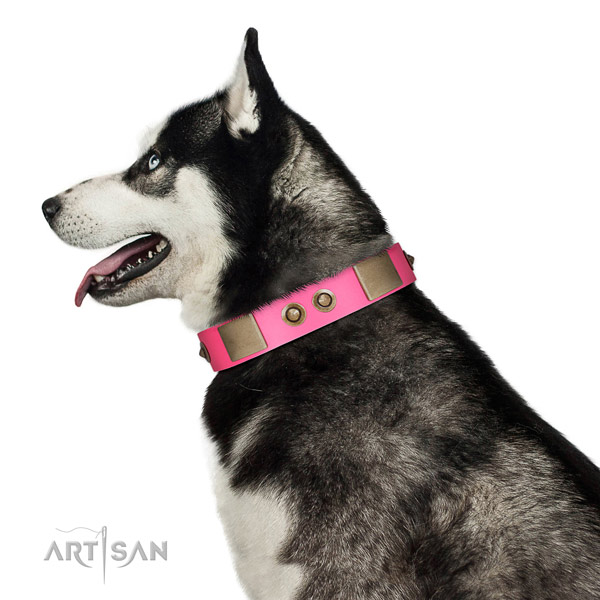 Everyday walking dog collar of natural leather with unique embellishments