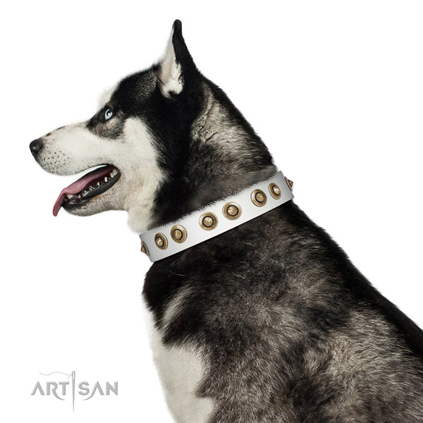 Comfy wearing dog collar of leather with awesome decorations