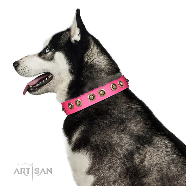 Full grain natural leather collar with studs for your handsome canine