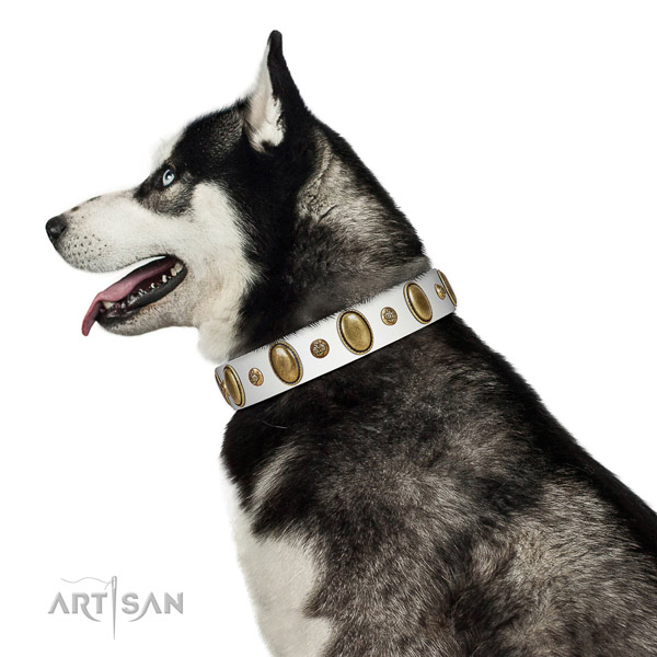 Significant leather dog collar with corrosion resistant buckle