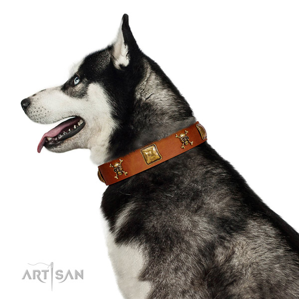 Significant full grain genuine leather dog collar with corrosion proof studs
