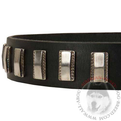 Nickel Plates Riveted to Siberian Husky Leather Collar
